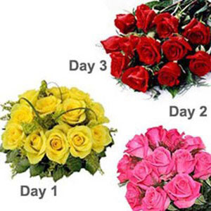 3 days serenade pink red yellow roses