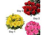 3 days Serenade, Roses