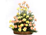 Golden Times, Carnations