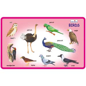 creative play and learn birds