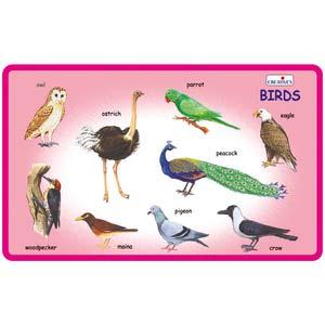 creative play and learn birds