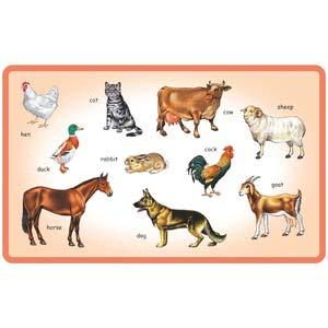 creative play and learn domestic animals