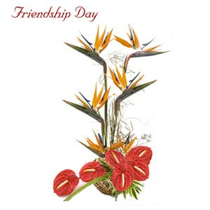friendship day fnp its your day exfd78