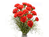 Luxury Red, Carnations