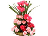 Fragrant Freesia, Pink Carnations