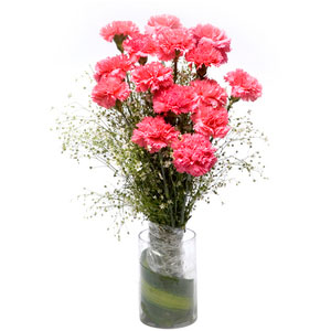 pink carnations glass vase