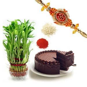 rakshabandhan lucky bamboo with cake rxp9