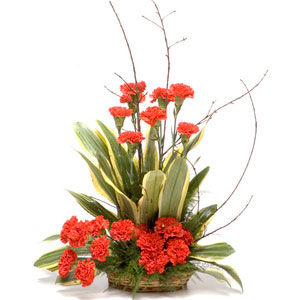 red carnations basket little sunshine