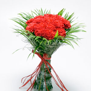 red carnations perfect lover