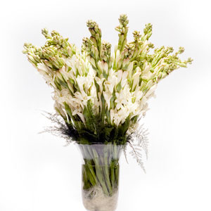 tube roses in glass vase sweet dreams