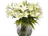 Refined Beauty, White Lilies in Vase